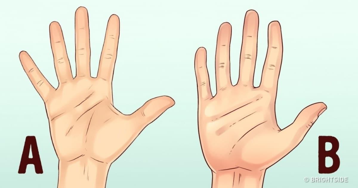 Hand Shape